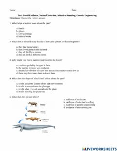 Interactive worksheet Fossil Evidence, Natural Selection, Selective Breeding, Genetic Engineering