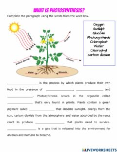 Interactive worksheet Photosynthesis Vs. Cellular Respiration