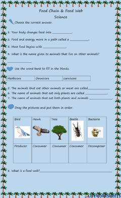 Interactive worksheet Food Chain and Food Web