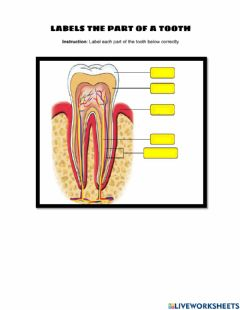 Interactive worksheet Structure of tooth