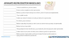 Interactive worksheet Aparato reproductor masculino 2