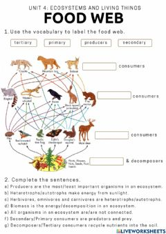 Ficha interactiva Food webs and Food chains