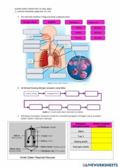 Interactive worksheet 2.1 Sistem Respirasi Manusia