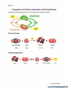 Interactive worksheet Photosynthesis