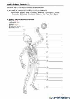Interactive worksheet Das Skelett