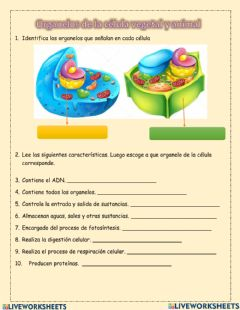 Interactive worksheet Organelos célula animal y vegetal