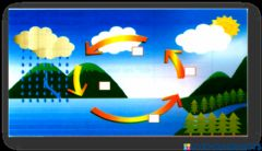 Ficha interactiva Re order the stages of water cycle