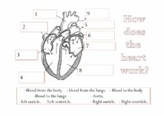 Interactive worksheet The heart
