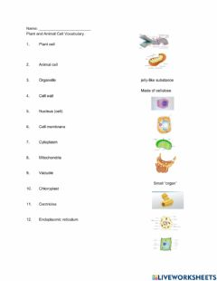 Interactive worksheet Plant and Animal Cells Vocabulary
