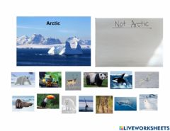 Interactive worksheet Arctic animal sort
