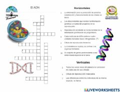 Interactive worksheet El ADN