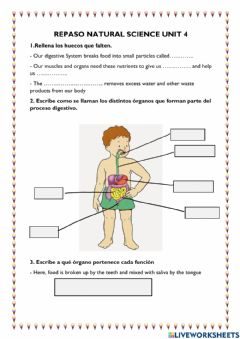 Ficha interactiva Digestive and excretory system