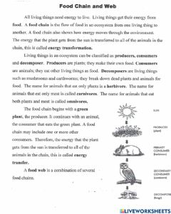 Interactive worksheet Food Web