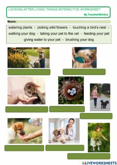 Interactive worksheet Looking after living things
