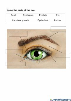 Interactive worksheet Eye Parts