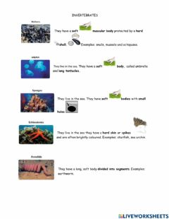 Interactive worksheet Invertebrates explanation and activities