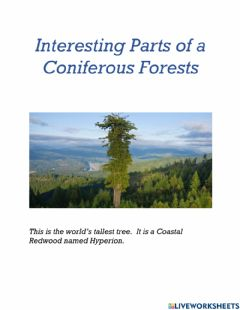 Ficha interactiva Interesting Parts of a Coniferous Forests