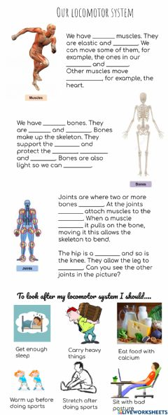 Interactive worksheet Our locomotor system