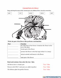 Interactive worksheet Parts of a hibiscus flower