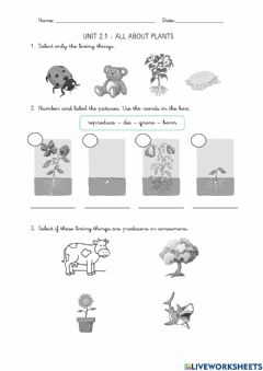 Interactive worksheet 2.1. All about plants
