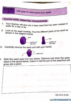 Interactive worksheet Life cycles of plants