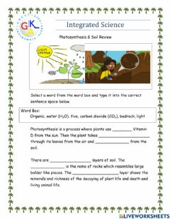 Ficha interactiva Photosynthesis & Soil Review