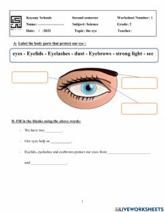 Interactive worksheet Eyes and hands activity