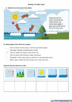 Ficha interactiva Reading: The Water Cycle