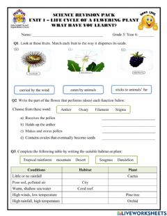 Interactive worksheet Unit 1 - Life cycle of a flowering plant