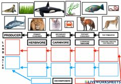 Interactive worksheet Food chain animals-plants