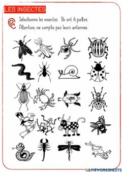Interactive worksheet Les insectes