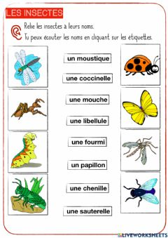 Interactive worksheet Les insectes-2