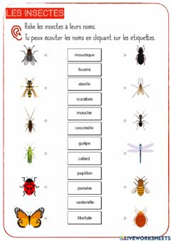 Interactive worksheet Les insectes-7