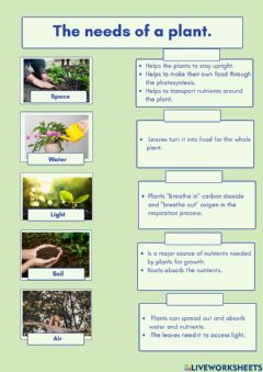 Interactive worksheet Plants and their needs.