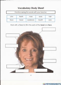 Interactive worksheet Head and Face Vocabulary Study Sheet
