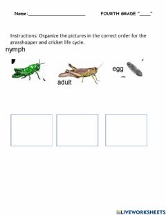 Interactive worksheet Science-insects