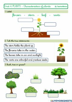 Interactive worksheet Characteristics of plants