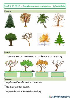 Interactive worksheet Deciduous and evergreen trees