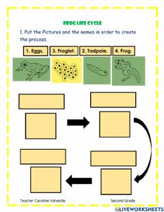 Interactive worksheet Frog life cycle