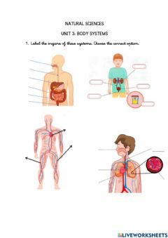 Ficha interactiva Body systems-natural sciences