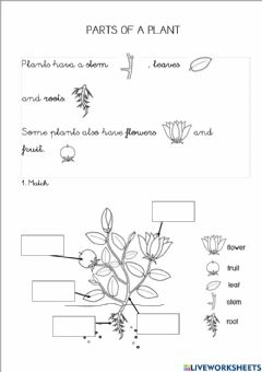 Interactive worksheet Part of the plants