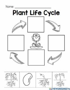 Interactive worksheet Plant Life Cycle (K)
