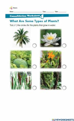 Interactive worksheet What are some types of plants