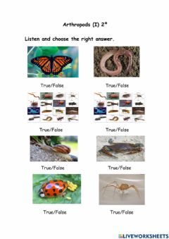 Interactive worksheet Arthropods (I) 2º