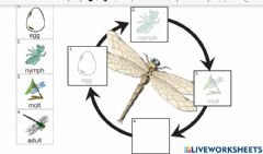 Interactive worksheet Dragonfly lifecycle