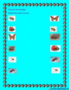 Ficha interactiva Match the same insects