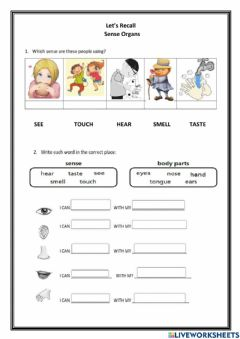 Interactive worksheet Sense organs