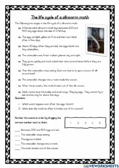 Interactive worksheet The life cycle of a silkworm moth