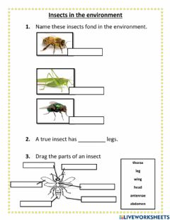Ficha interactiva Insects in our environment
