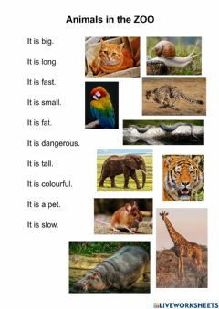 Interactive worksheet Animals in the zoo